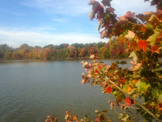 Dudley and I paused to look across the lake at the fall colors.