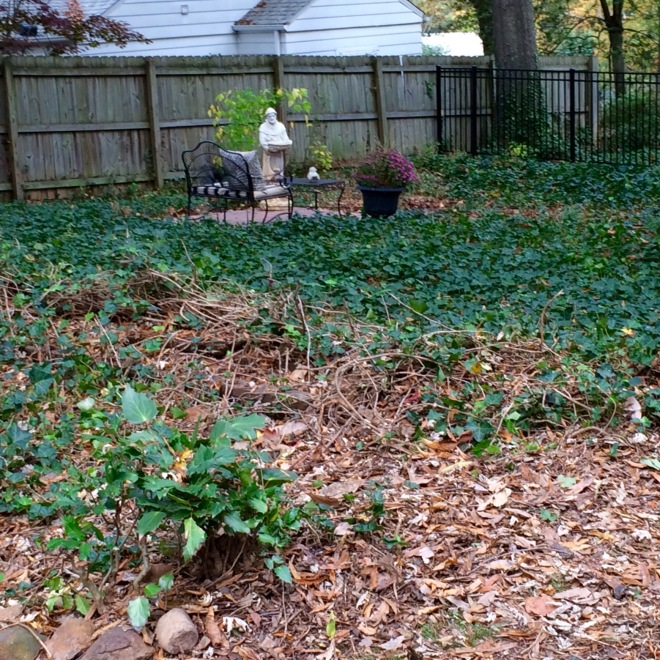 A flower bed waits to be unencumbered from the ivy.
