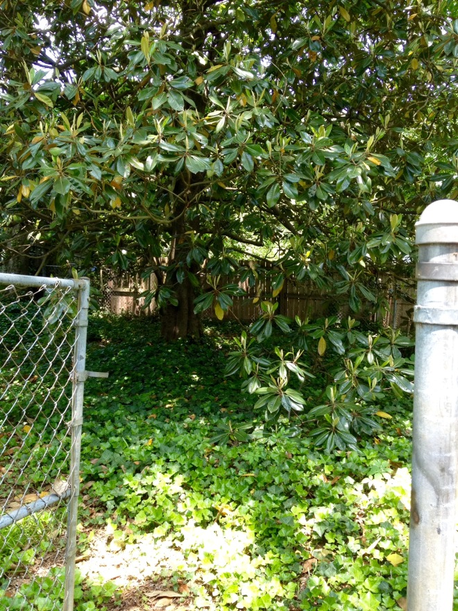 A chain link fence created a dog run in this yard's previous life.