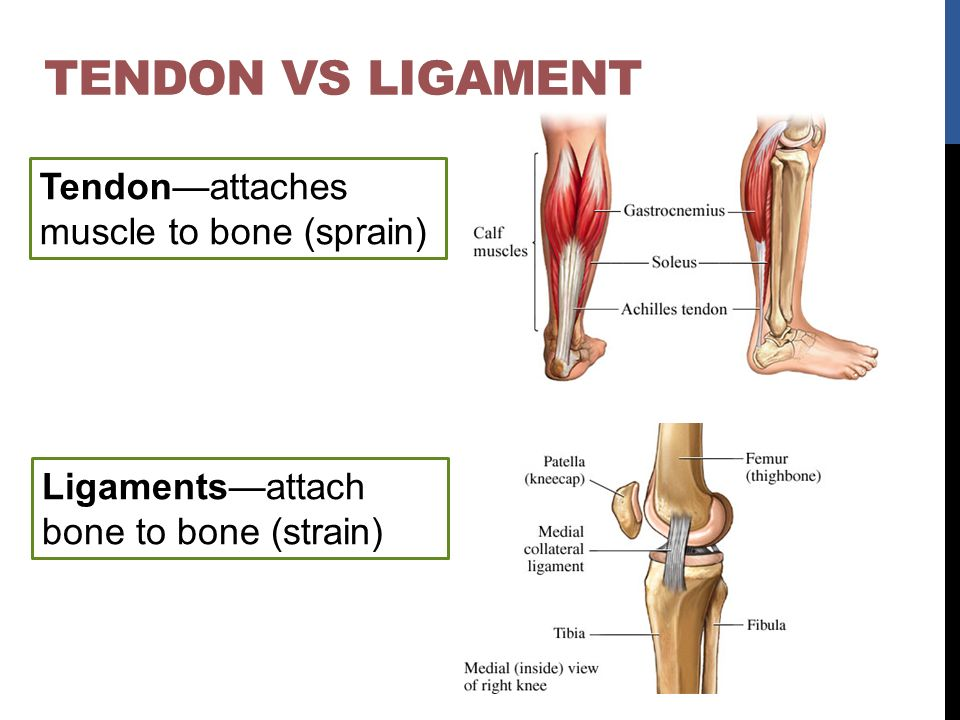 Ligaments—attach bone to bone (strain)